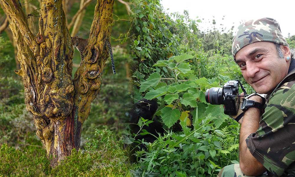 Fotoğrafta çok iyi kamufle olan bir leopar var gördünüz mü? İşte Süha Derbent'in fotoğrafları