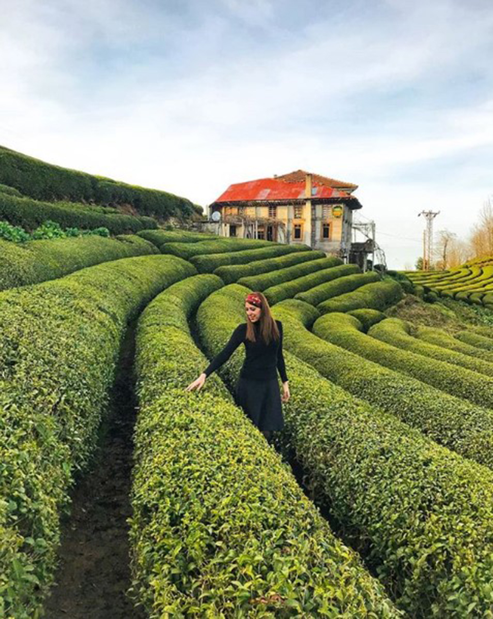 Çay hasadına formül aranıyor
