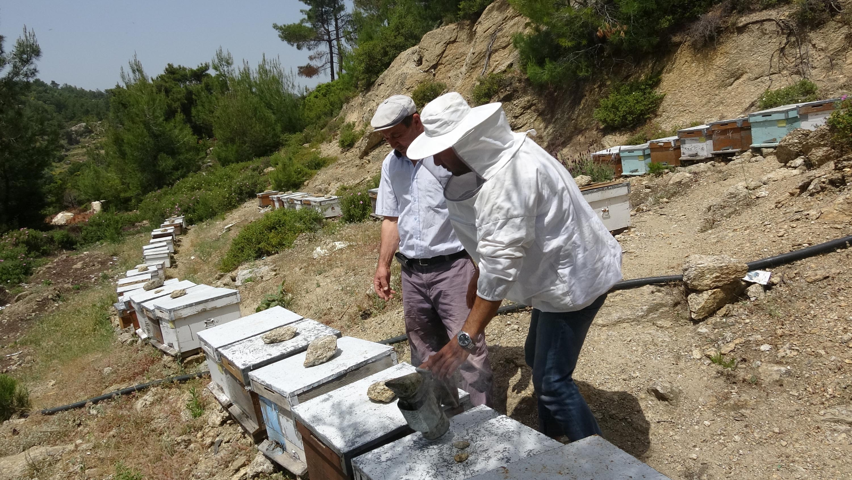 Koronavirüs arı satışlarını yüzde 100 artırdı