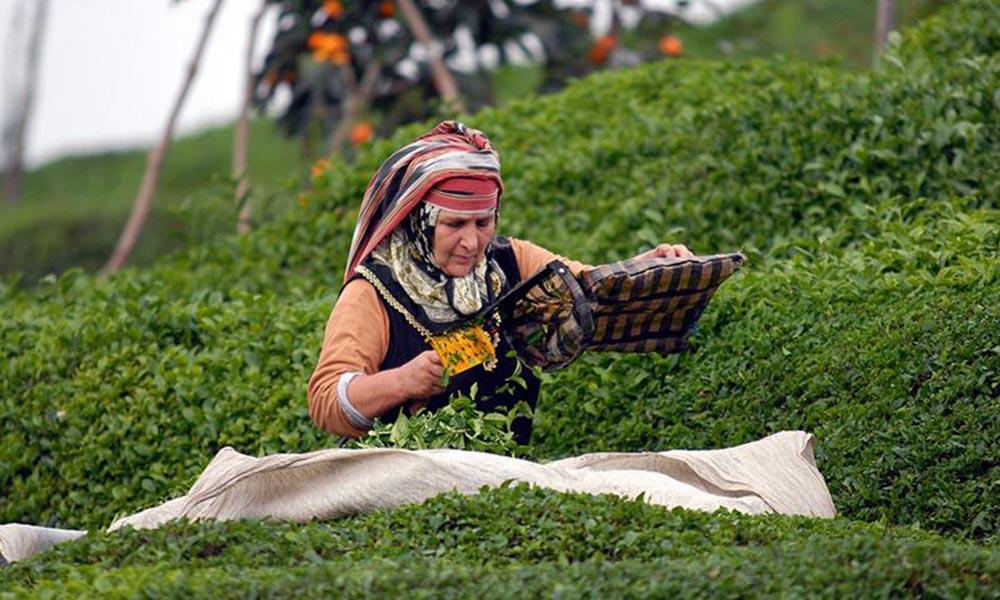 İçişleri Bakanlığı'ndan çay üreticileri için genelge