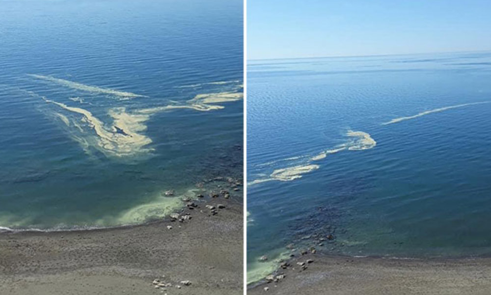 Mersin'de denizdeki renk değişikliğinin nedeni ortaya çıktı