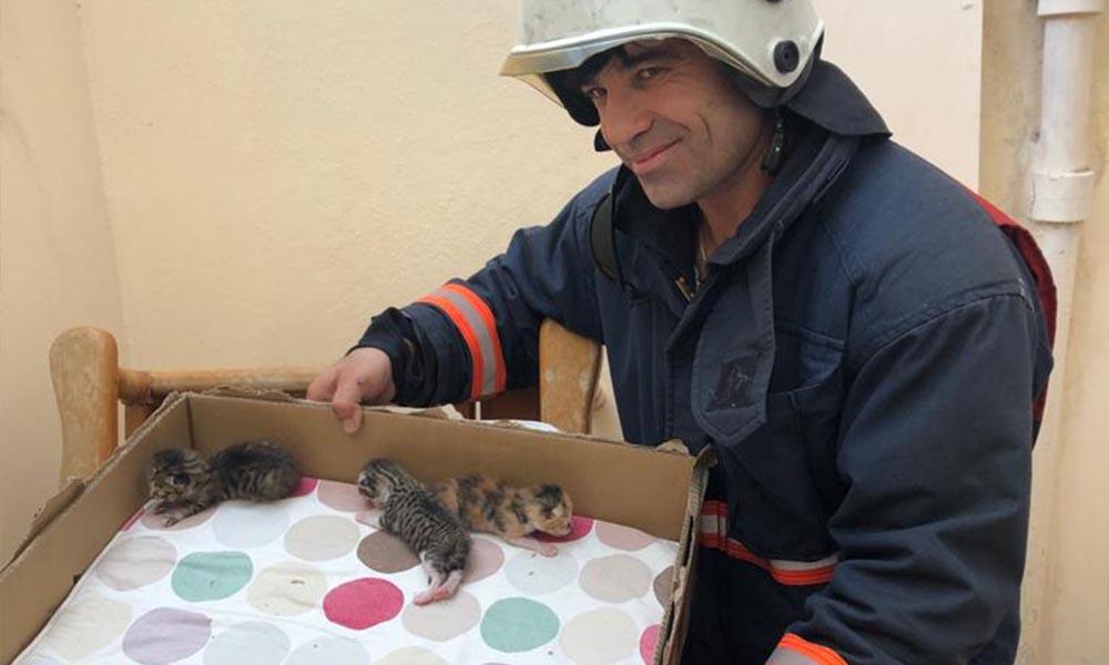 Büyükşehir itfaiye ekiplerinden, yavru kedi kurtarma operasyonu