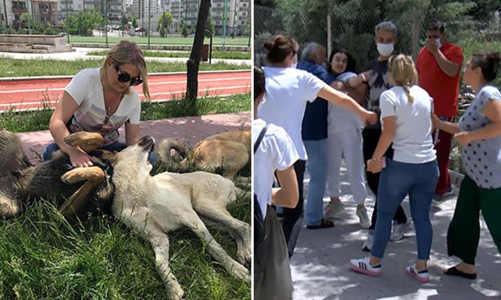 Sitede 'köpek besleme' kavgası: Kayısı, soğan ve patates attılar