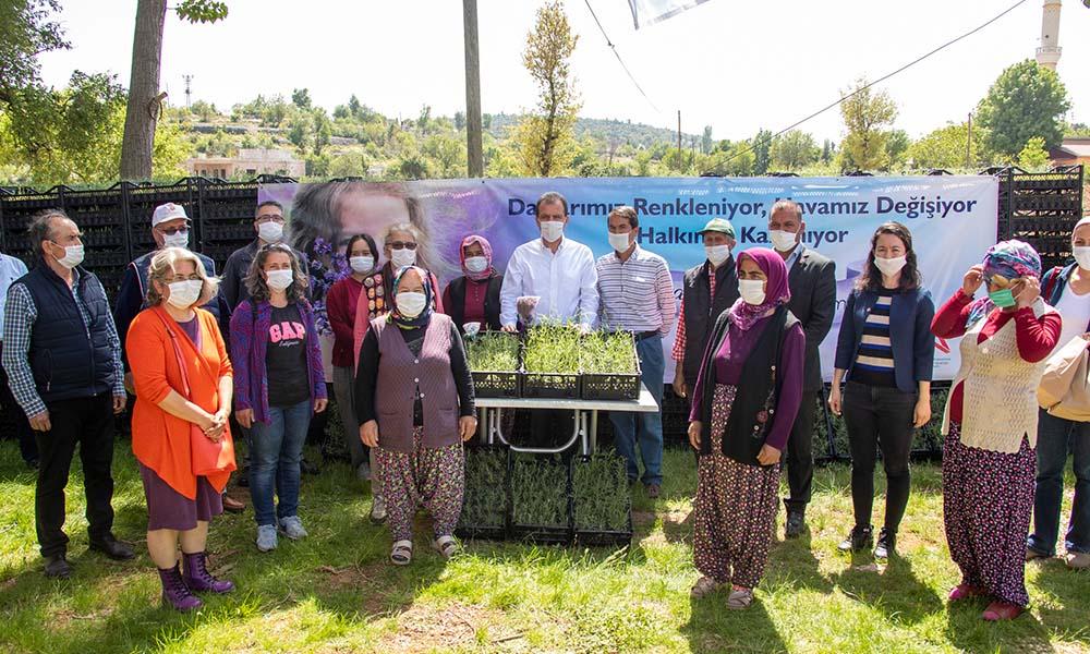 Mersin Büyükşehir, 100 bin lavanta fidesi dağıtımını tamamladı