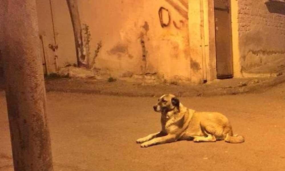 Sokak köpeğini öldüren adam serbest bırakıldı!