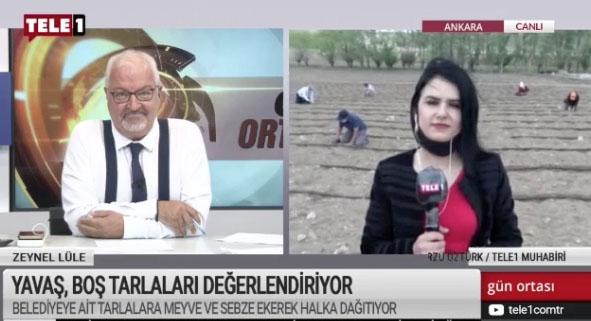 Ankara'da belediye atıl arazilerde tarıma başladı
