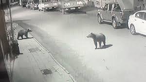 Gündüzleri koronavirüsten geceleri ise ayıdan ötürü sokağa çıkamıyorlar