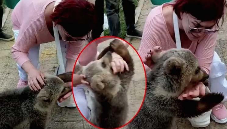 Emel Müftüoğlu'na yavru ayı saldırdı