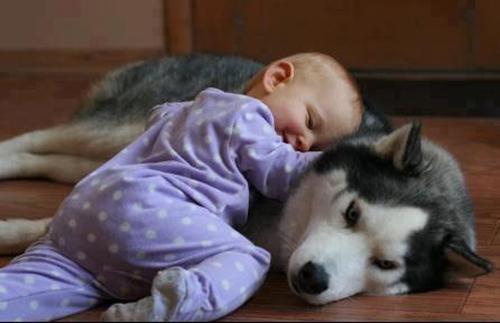 Bebekler ve hayvanların dostluğu