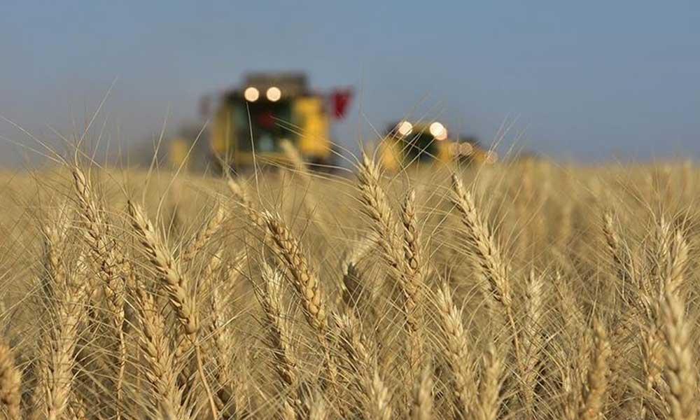 AKP'nin buğday oyunu: Çiftçi zor durumda