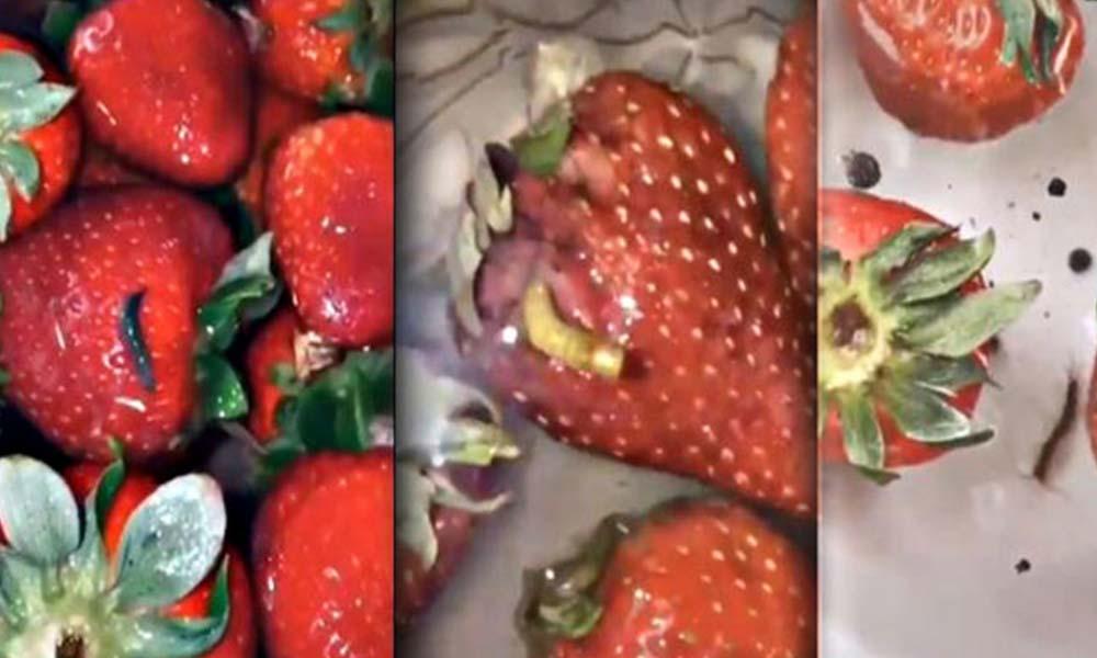 Gıda mühendisinden çilek açıklaması: Bu durum doğanın döngüsü