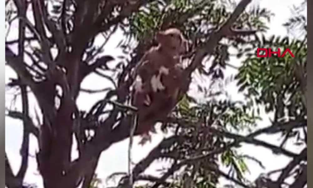 Maymunlar, koronavirüs hastalarının kan örneklerini çaldı