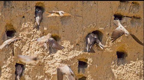 Afrika'dan göç ettiler, kum apartmanlarıyla görsel şölen oluşturdular