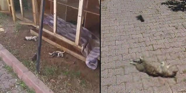 Anne kedi ve 6 yavrusu öldürüldü, mahalleli tepki gösterdi