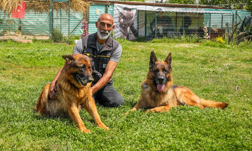 Koronavirüsle mücadelede yeni yöntem: Köpekler…