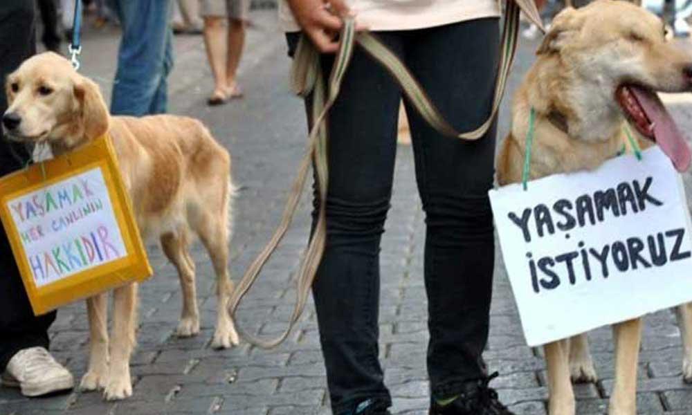 Vahşeti sosyal medyadan yayınladı: Köpeği ilgi çekmek için yaktım