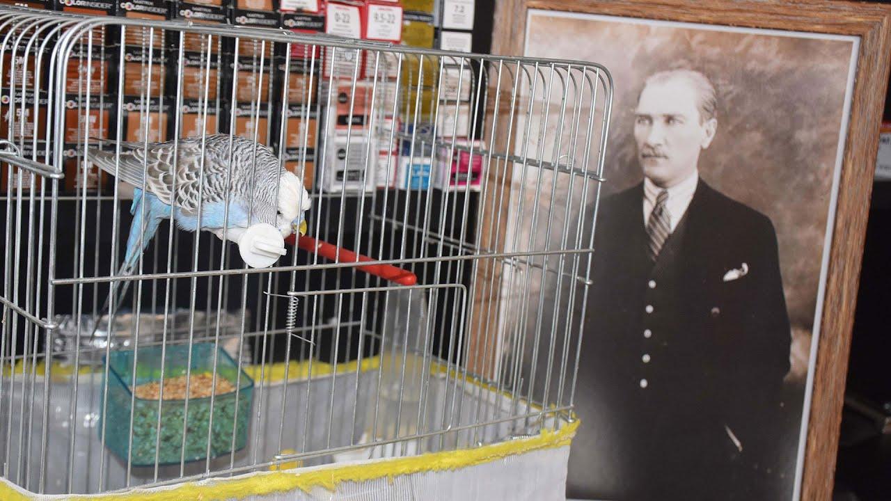 Muhabbet kuşu 'Atatürk'ü çok seviyorum' diyor