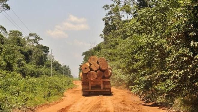 Korona döneminde orman katliamı yüzde 150 arttı!