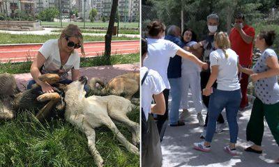 Sitede 'köpek besleme' kavgası