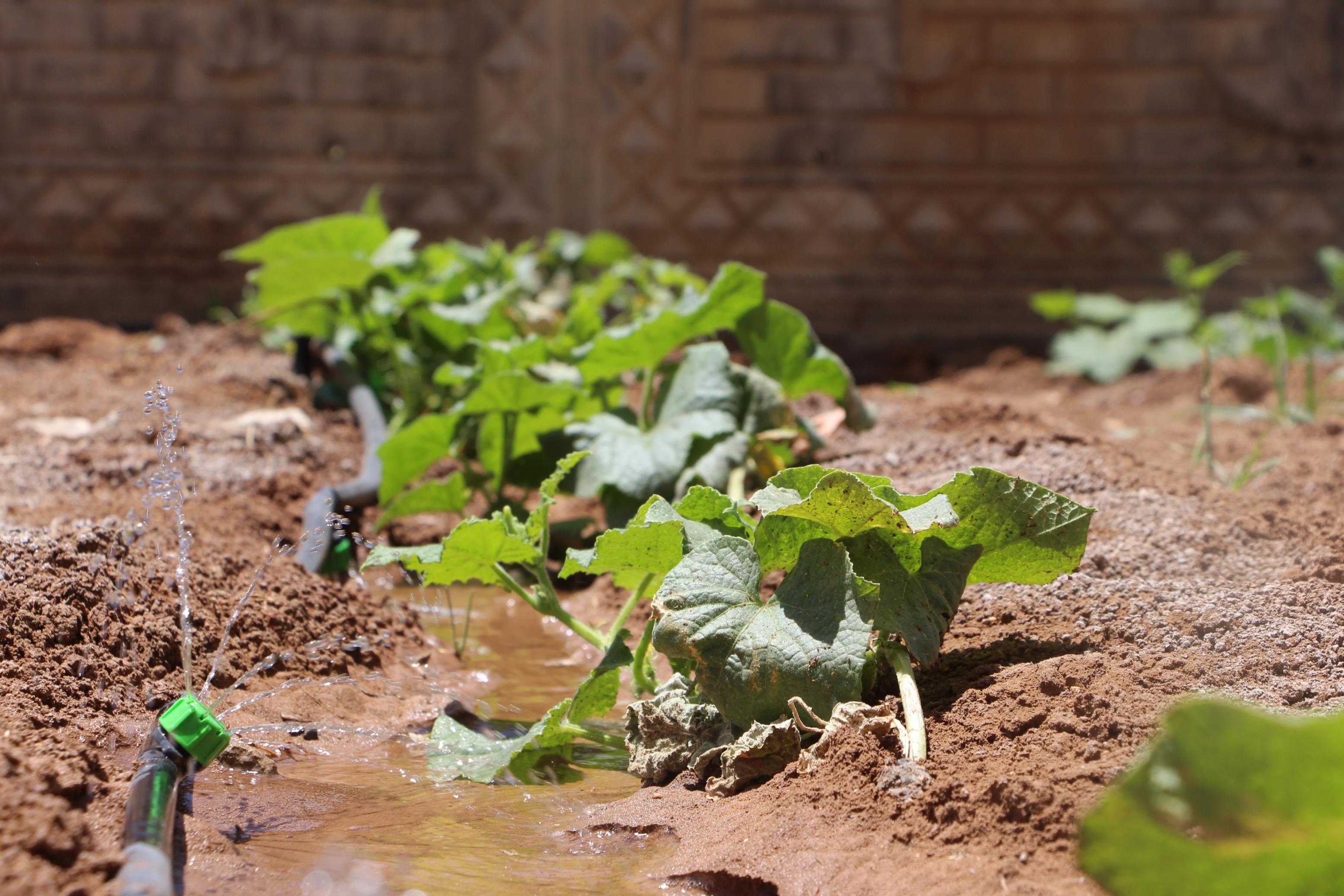 Okulun bahçesinde yetiştirilen sebze ve meyveler ihtiyaç sahiplerine dağıtılacak