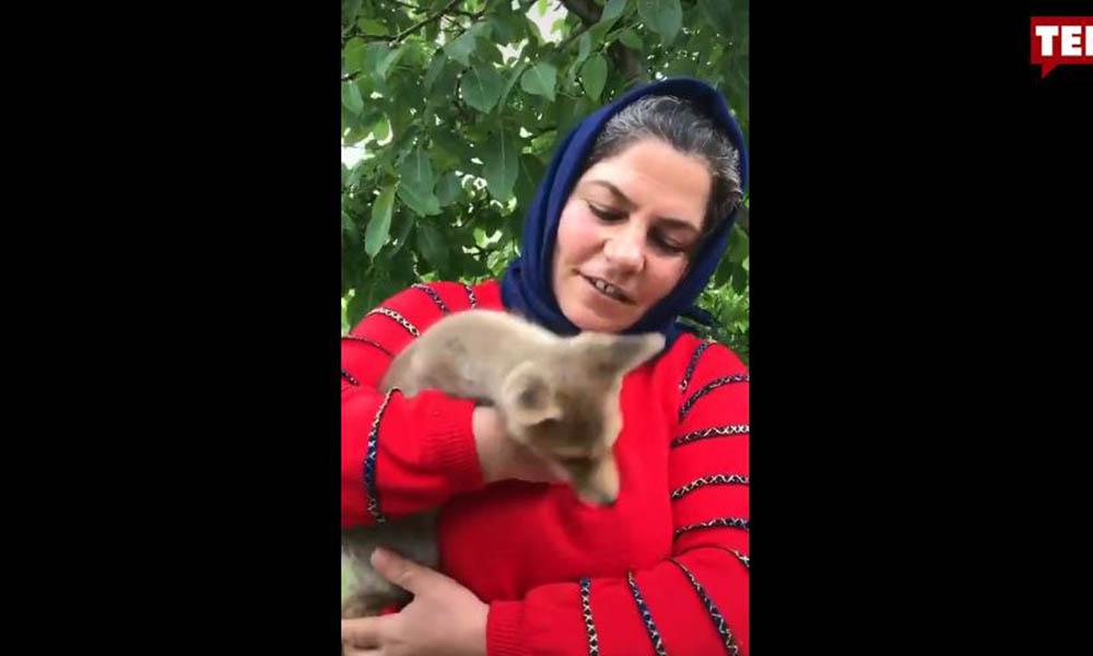 Zileli kadın yavru tilkiyi sahiplendi adını da pamuk koydu: Acıkınca eve geliyor
