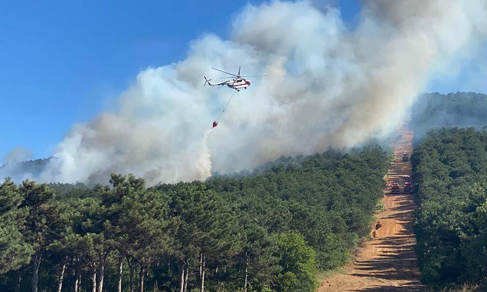 İstanbul'da Kayışdağı'nda korkutan orman yangını