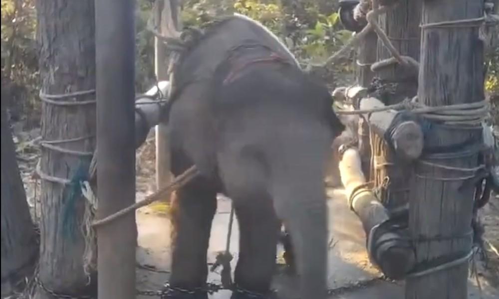 Fillere yapılan korkunç muamele utandırdı!