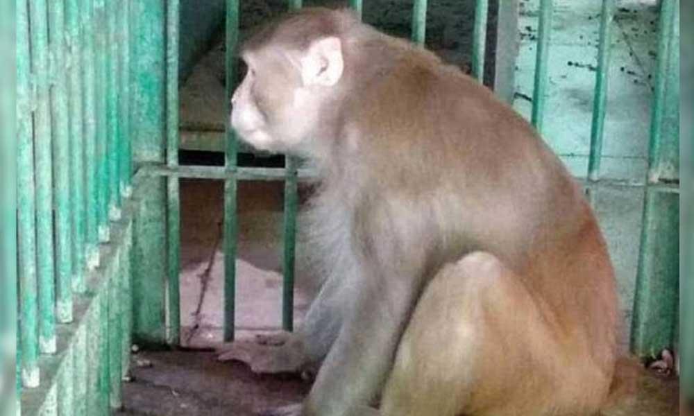 Bir kişiyi öldürüp, 249 kişiyi yaraladı… Alkol bağımlısı maymuna müebbet hapis