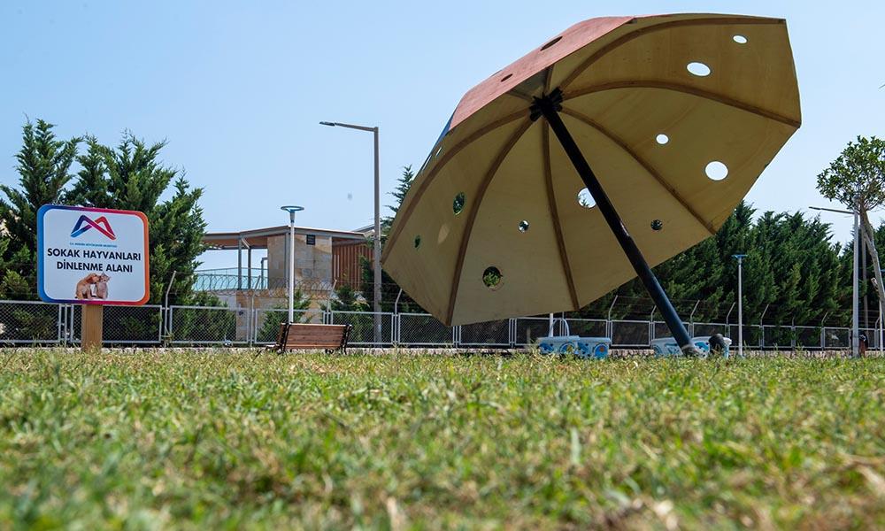 Patili dostlar için rengarenk şemsiyeler