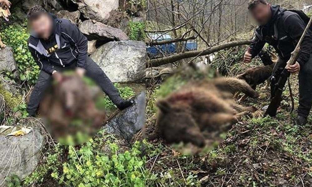 Yavru ayıya tüfekle vurup işkence yapan Tanju Çolak serbest bırakıldı