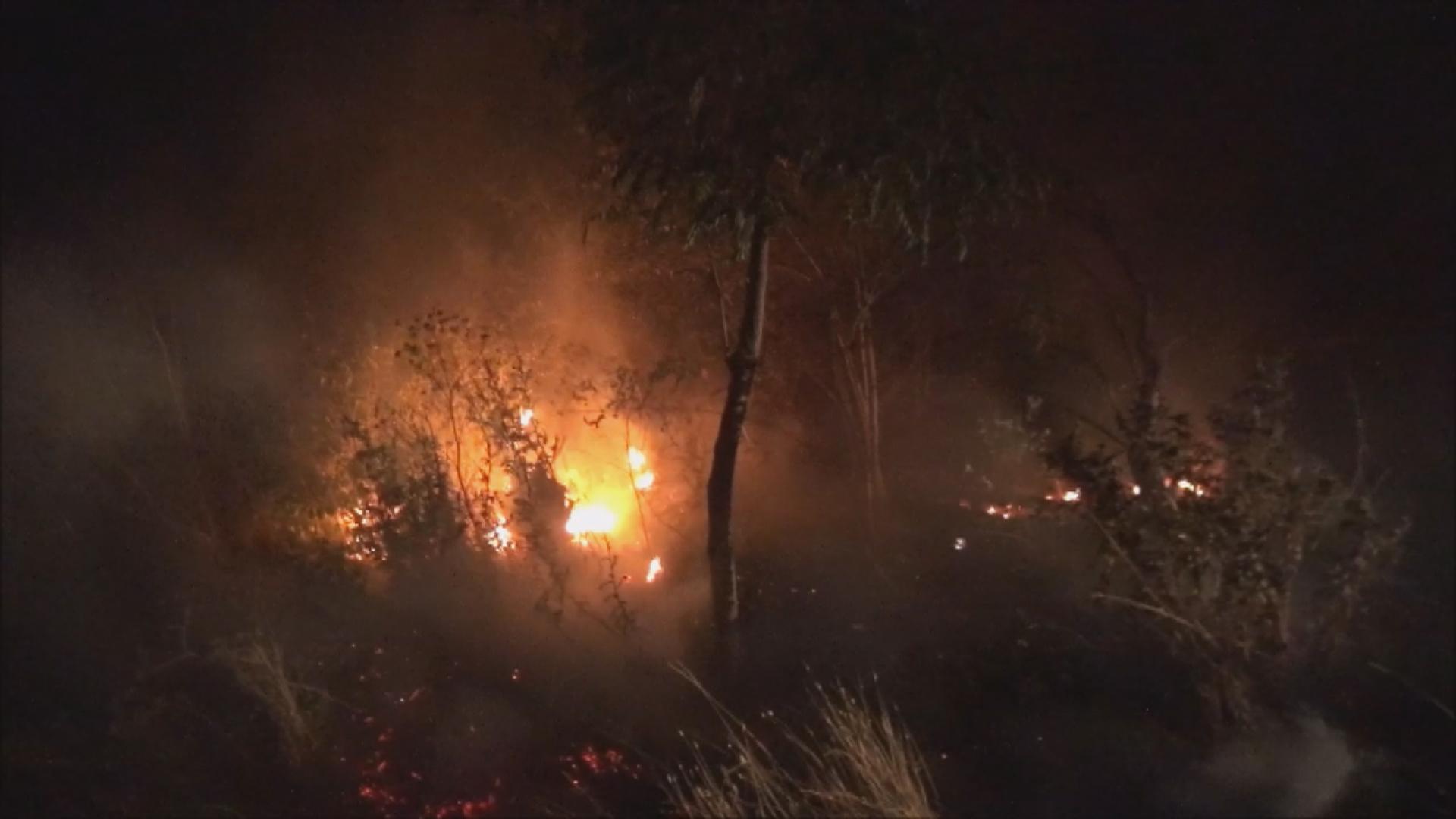 Silivri'de ağaçlık alanda yangın