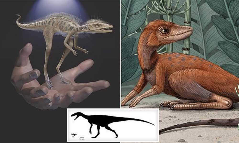 'Dinozorların atası' olduğu düşünülen bir dinozor bulundu
