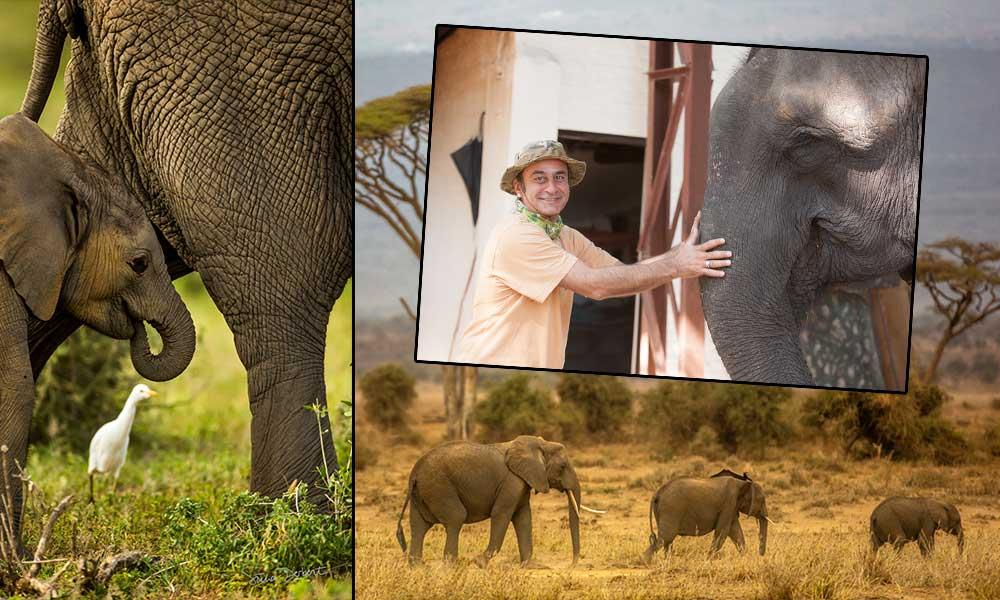 'Fil yavrusu 30 litre süt içer' Filler hakkında hiç bilinmeyenler… İşte Süha Derbent fotoğrafları