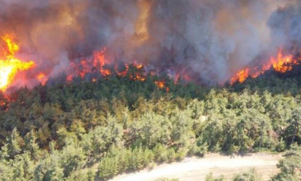 Gelibolu'daki yangın söndürüldü: 450 hektar alan kül oldu