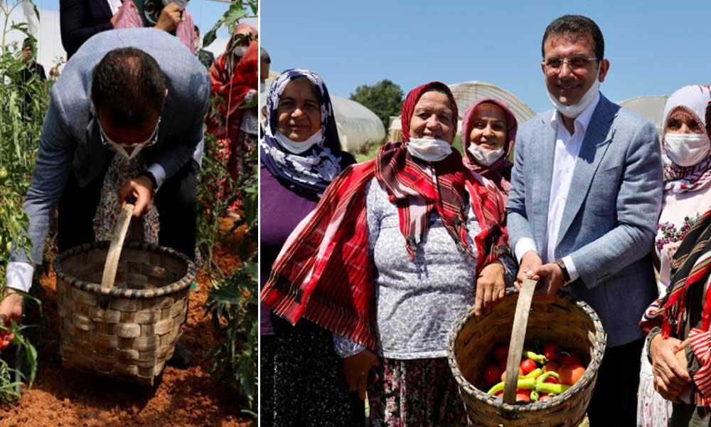 İmamoğlu 'Hasat Bayramı'na katıldı: Gerçek belediyecilik budur