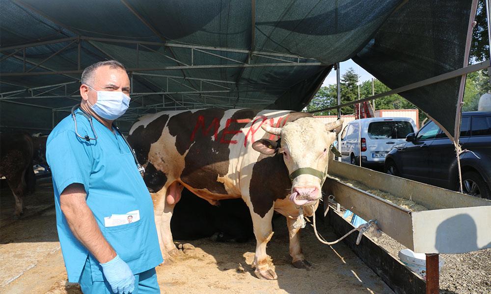Kartal Belediyesi'nden kurban satış alanına sıkı pandemi denetimi