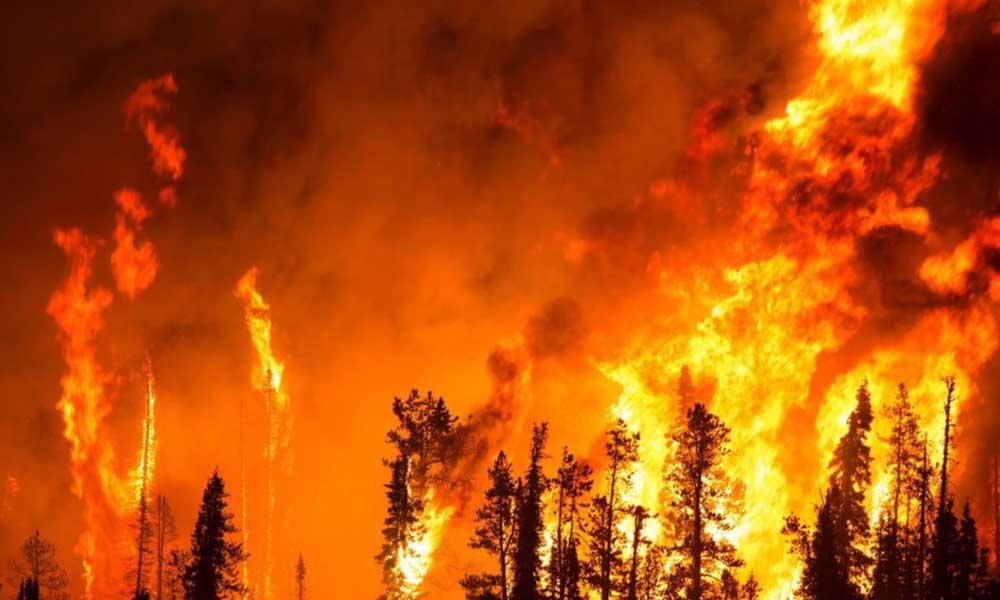 Türkiye'nin içler acısı orman yangını bilançosu! Yangınların yarısının sebebi bilinmiyor