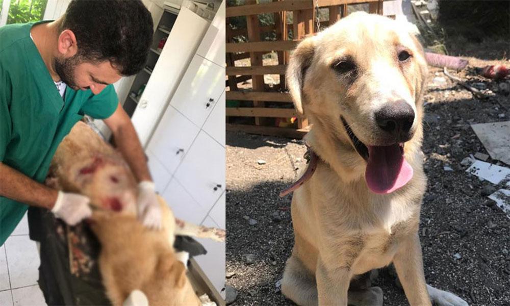 Köpek bıçakladığı için gözaltına alınan şahıs, serbest bırakılınca öldürdü!