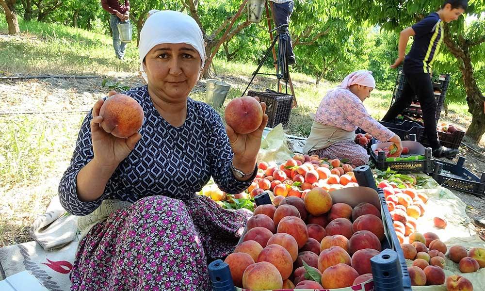 Çiftçi isyan ediyor: Şeftali tarlada 2, markette 8 lira