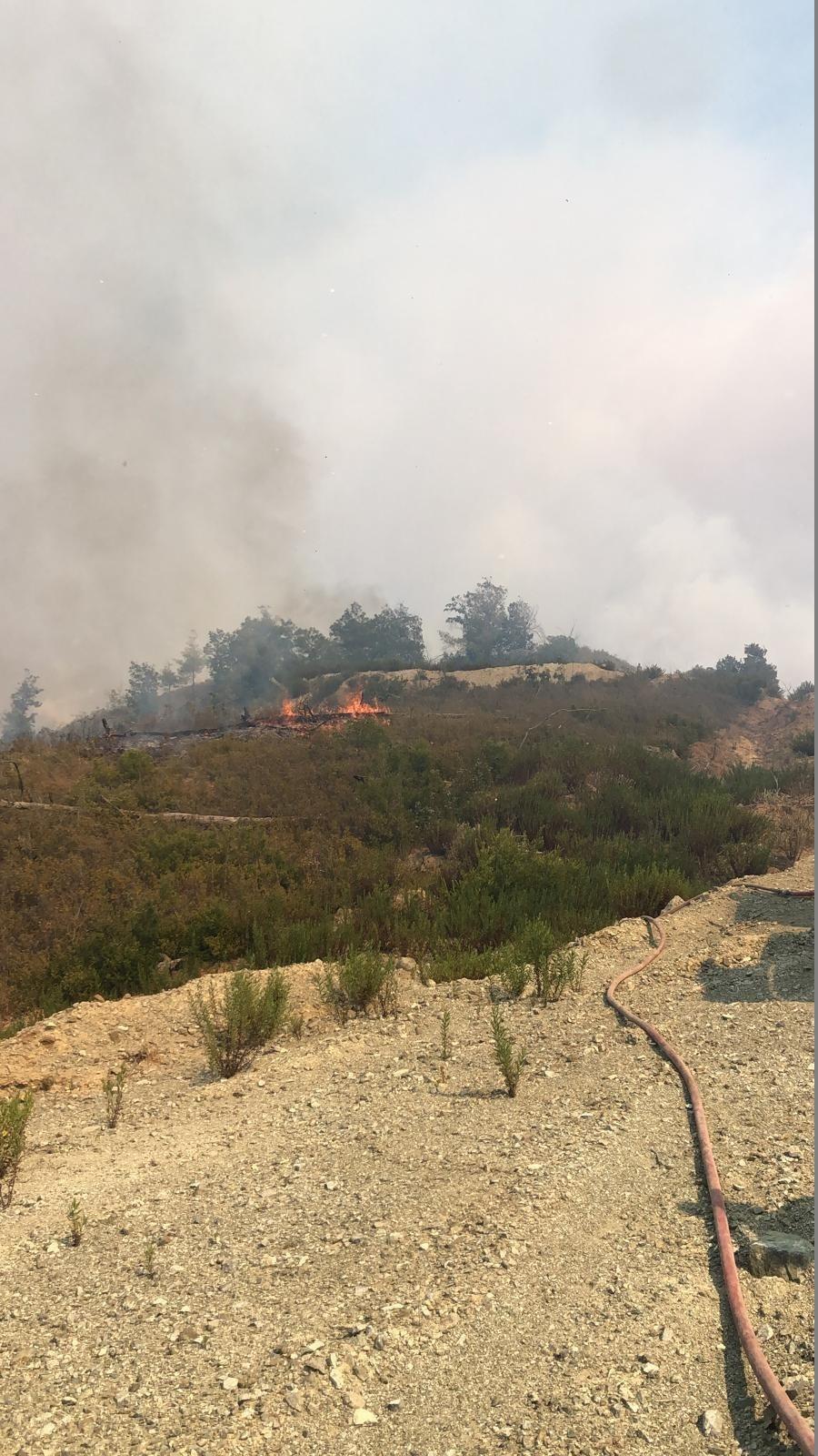 Suriye'de çıkan orman yangını Türkiye'ye sıçradı