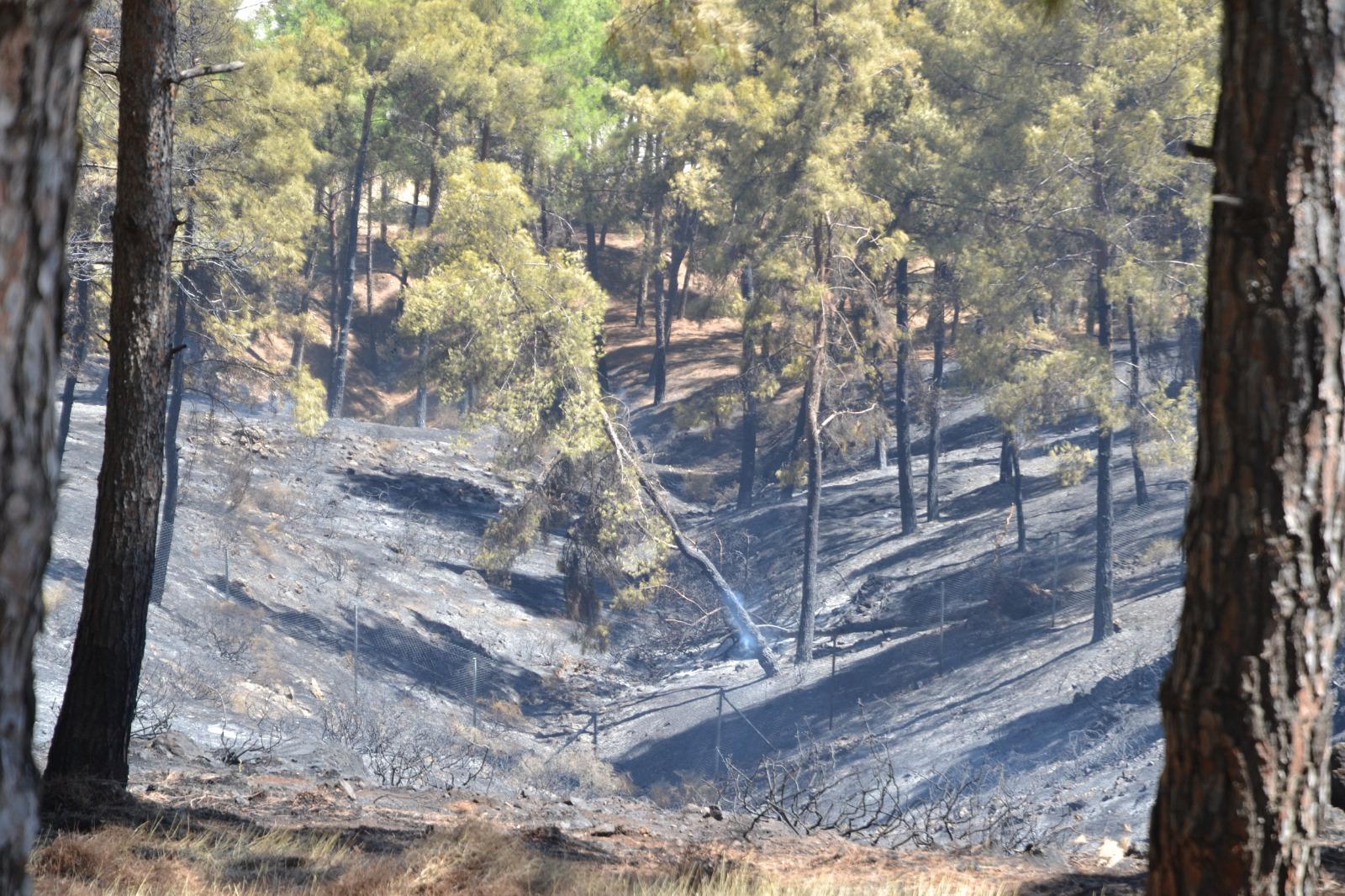 Hatay'da 10 hektar ormanlık alan kül oldu