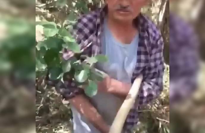 Köpeğe tecavüz edip intihara kalkışan adamın köylüleri: Daha önce de yaptı, onunla yaşamak istemiyoruz