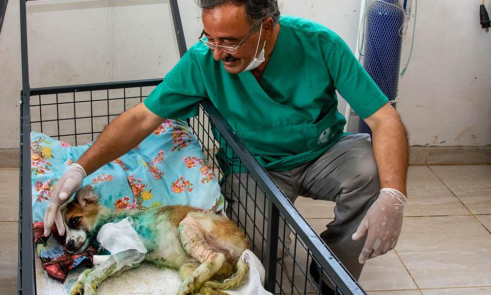 Büyükşehir, bayramda da yaralı hayvanlara müdahele etti