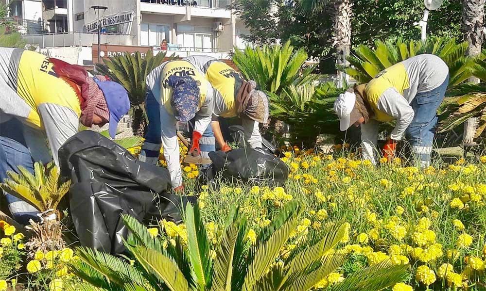 Didim'de çiçek ekim çalışmaları gerçekleşiyor