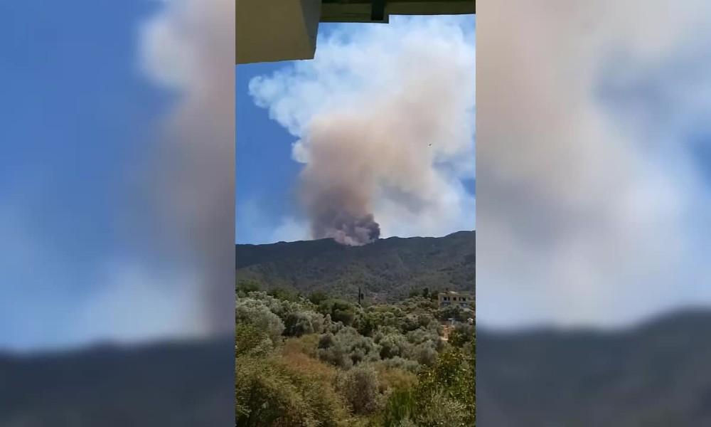 Aydın Çine'de orman yangını!