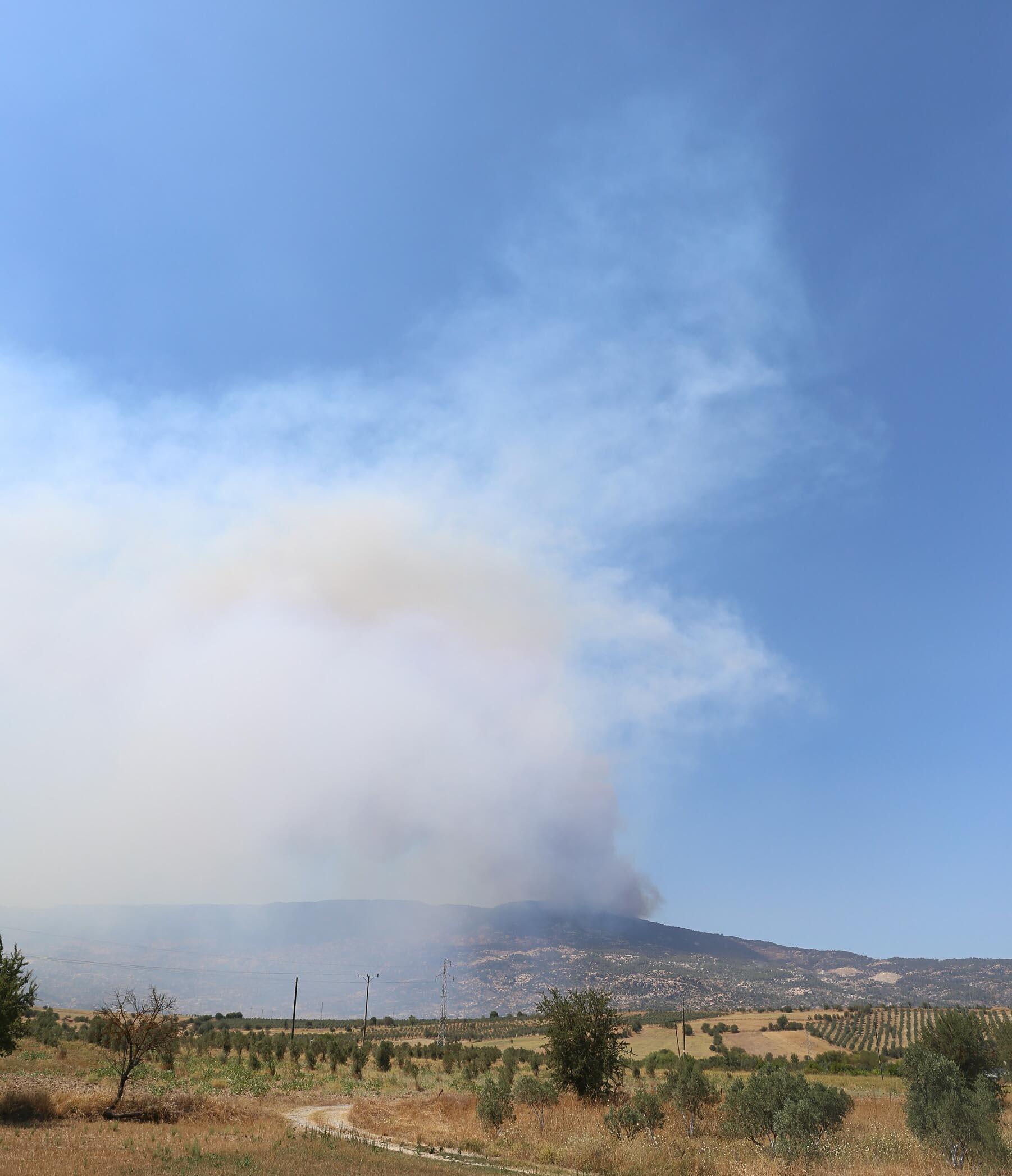 Aydın'da ormanlık ve makilik alanda yangın