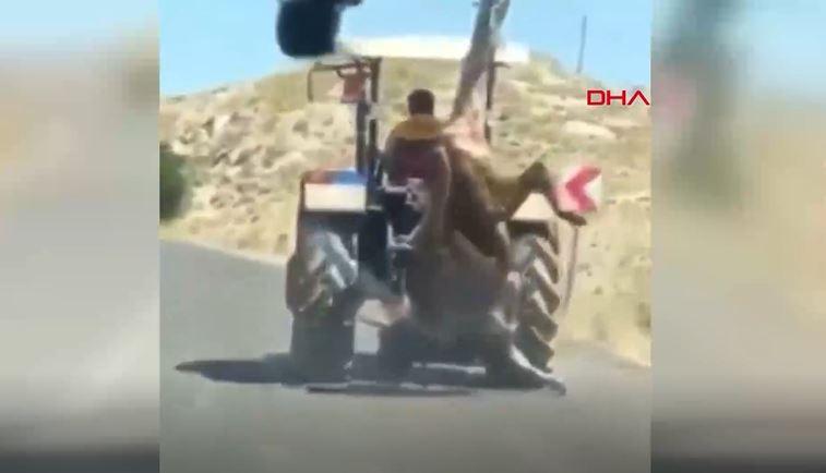Kestiği kurbanlık ineği, traktörün arkasında asılı götürdü!