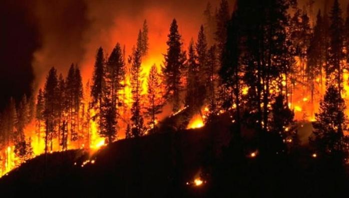İzmir Menderes'teki orman yangını şüphelisi tutuklandı