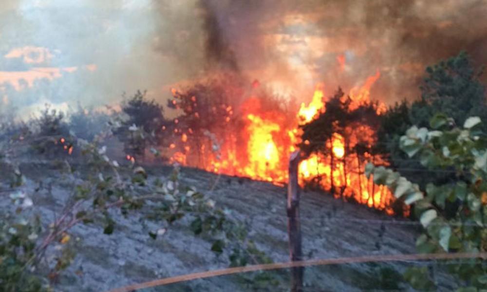 Kozan'da ormanlık alanda yangın: 4 kişi gözaltına alınıp, serbest  bırakıldı