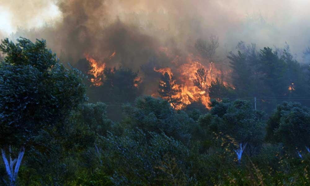Son 24 saatte 20 tane orman yangını çıktı! OGM uyardı: Orman yakmanın müebbet cezası var